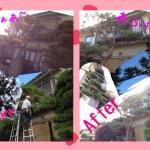 Matsumoto Backpackers hostel garden